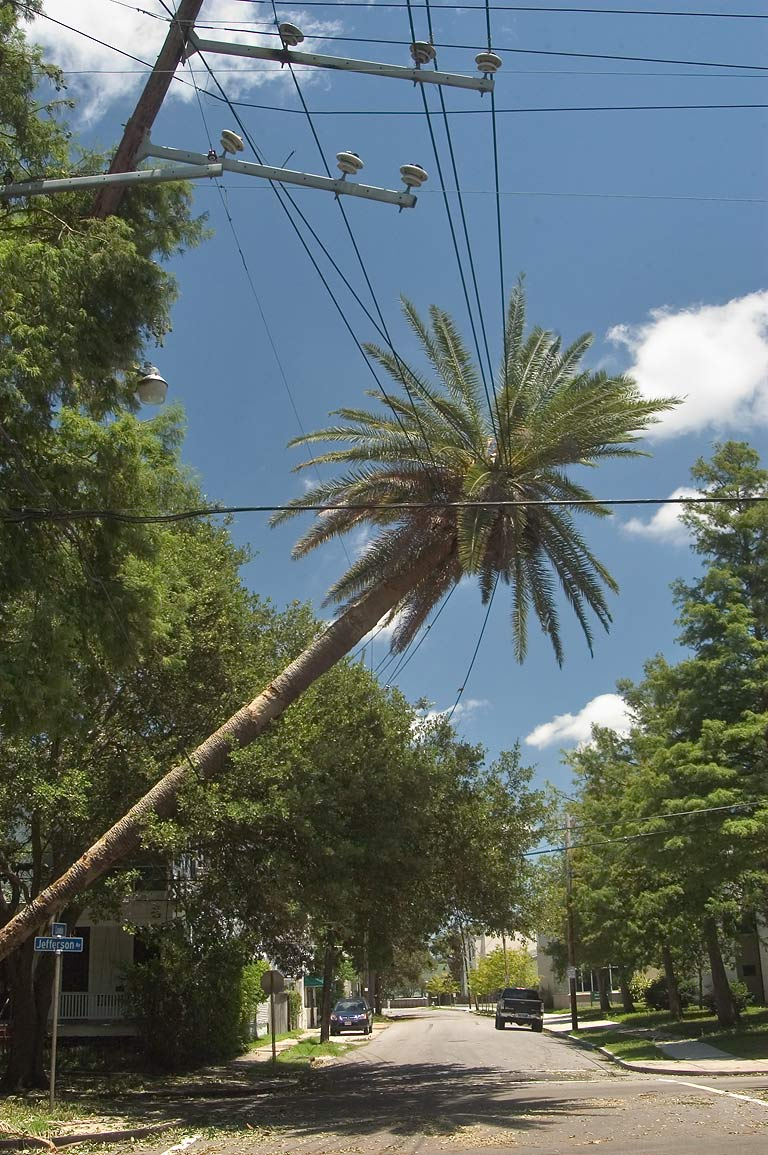 A palm and electric cables broken by a tropical...Jefferson Ave.. New Orleans, Louisiana