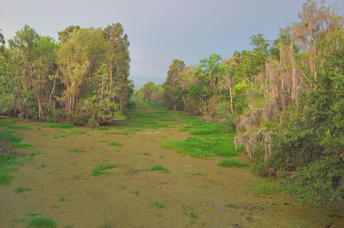 Kenta Canal covered by duckweed, view from a...Preserve. New Orleans, Louisiana