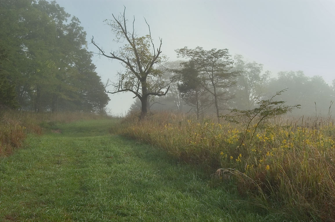 High Ridge Trail in morning fog in Rock Bridge State Park. Columbia, Missouri