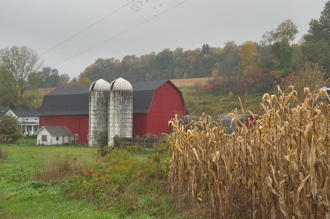 Corn field, silo and a farm north from Lamphier Rd.. Locke, New York