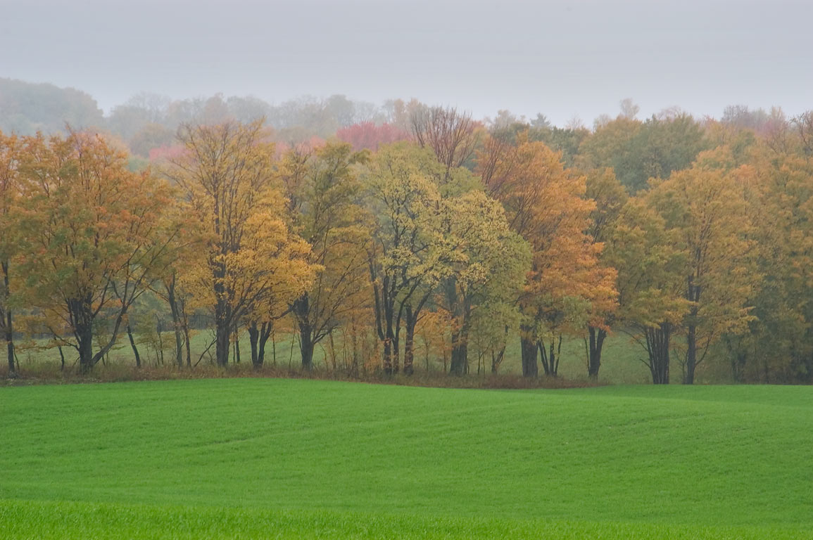 A pasture and a row of trees, view from Black Oak Road. Catharine, New York
