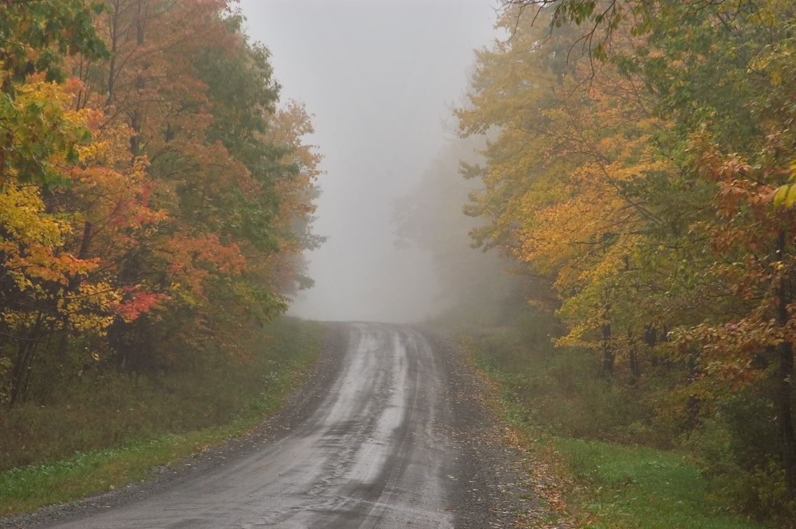 Black Oak Road in fog. Catharine, New York