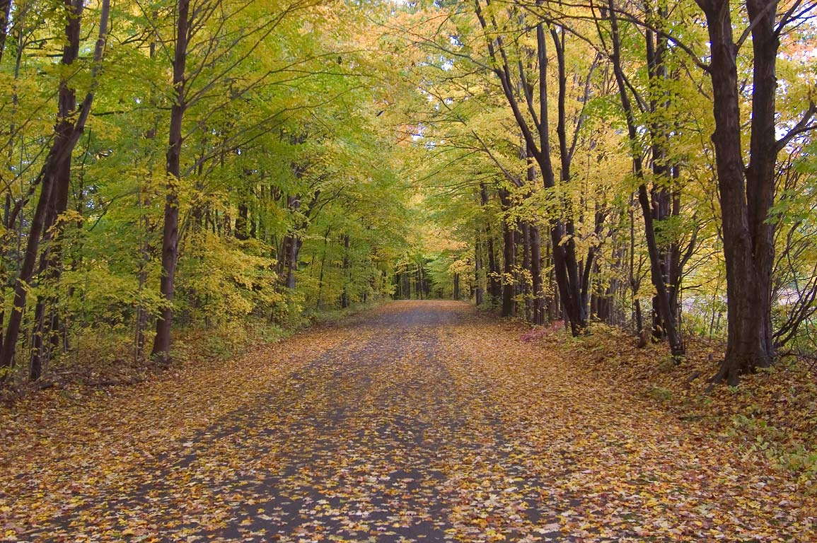 Foliage on South Rim Rd. in Fillmore Glen State Park. Moravia, New York