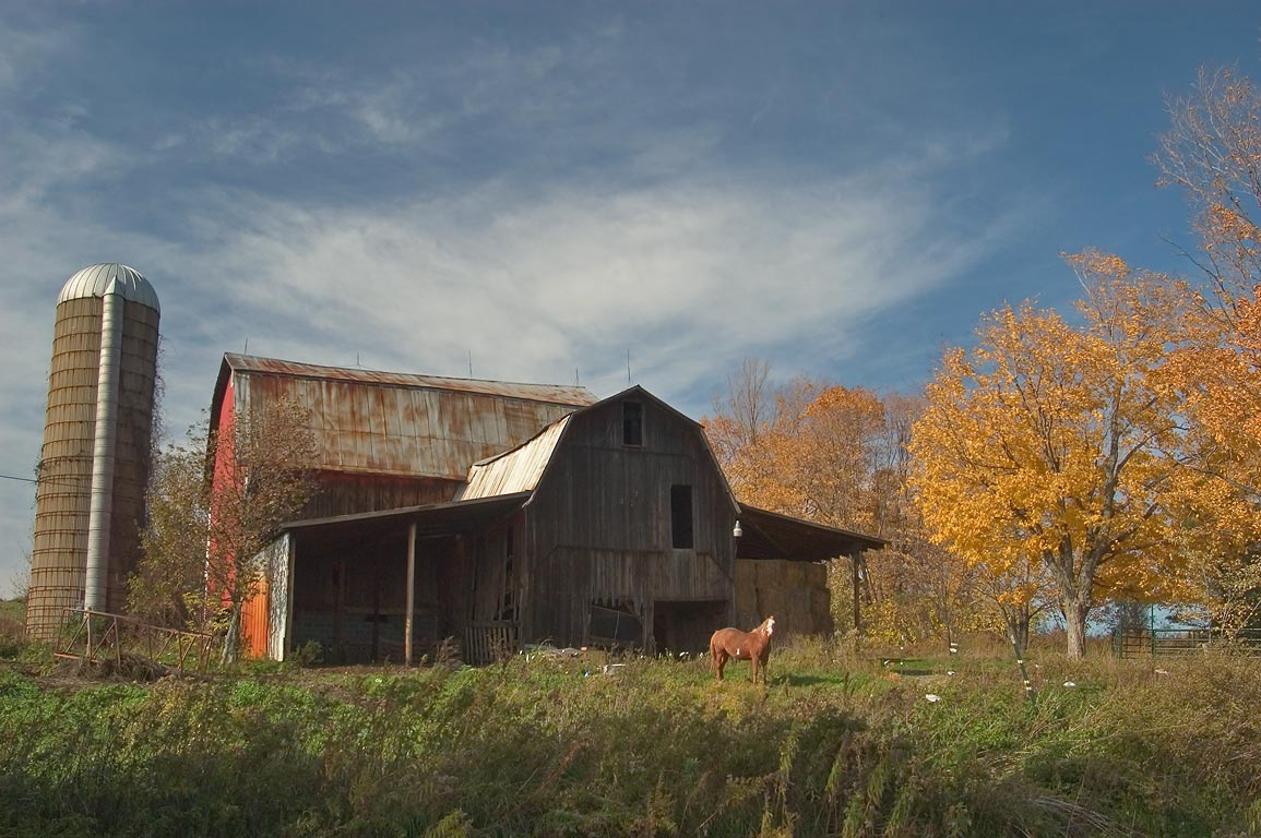 A barn and a horse near Newtown Rd.. Hector, New York