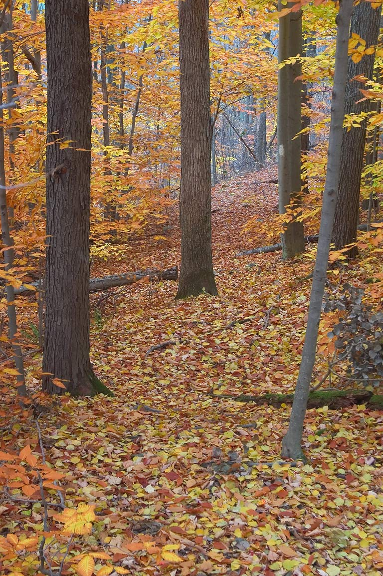 Finger Lakes Trail near Michigan Hollow Rd., part of Abbott Loop. Danby, New York