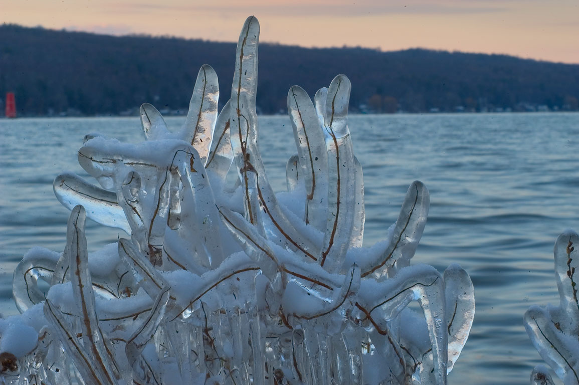 Icy bush on a shore of Cayuga Lake in Stewart Park. Ithaca, New York
