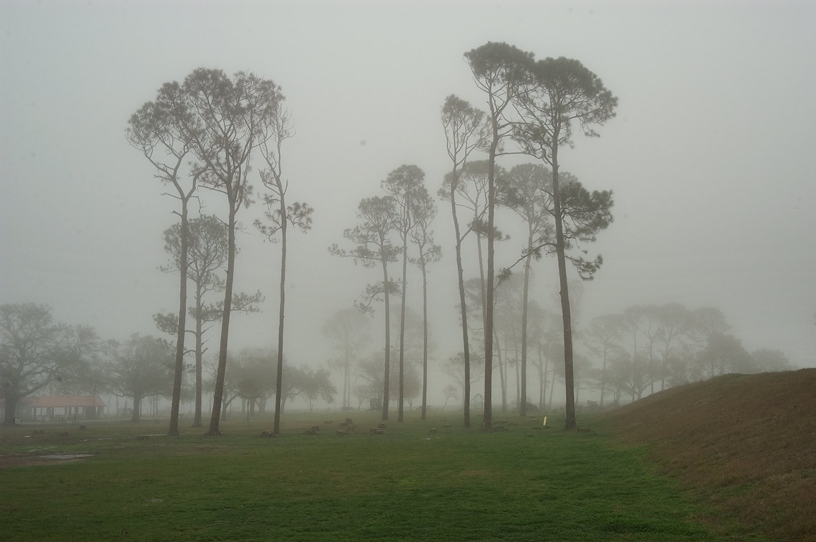 Pine trees of Lakeshore Park in fog. New Orleans, Louisiana