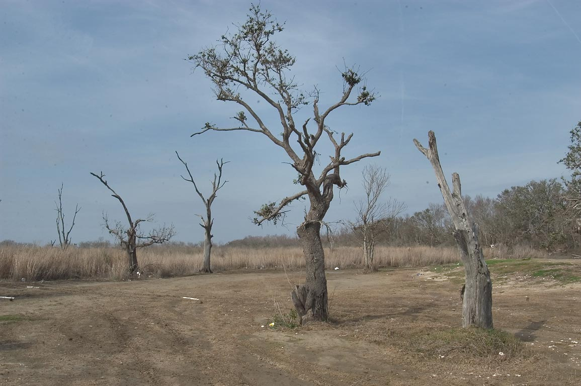 A marsh and dried forest in Hopedale, St.Bernard Parish, east from New Orleans. Louisiana