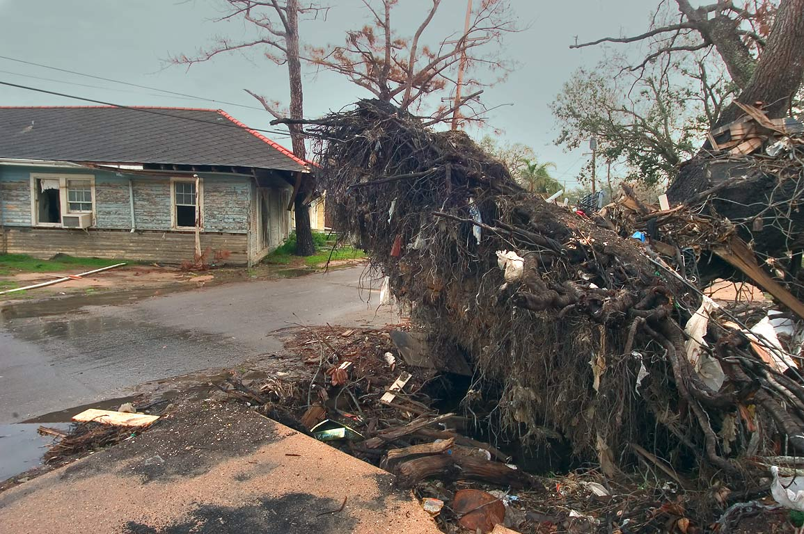 A fallen tree near Bellaire Dr. in Lakeview. New Orleans, Louisiana