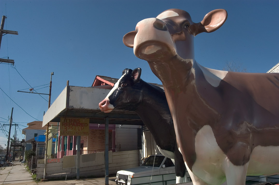 Cow sculptures of Brown's Dairy on Baronne St.. New Orleans, Louisiana