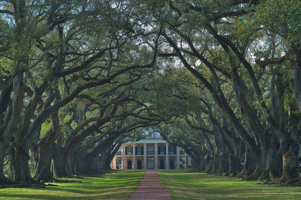 Trees of Oak Alley Plantation, view from the gate. Vacherie, Louisiana