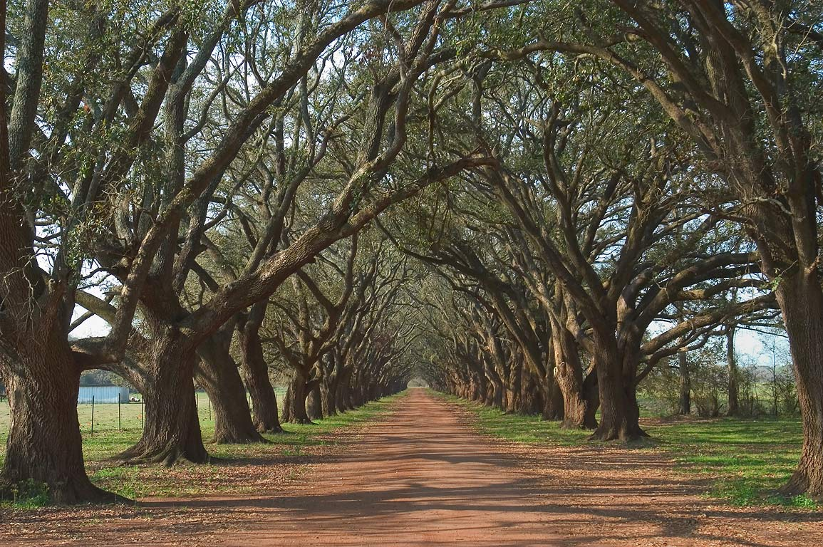 An oak alley near Evergreen plantation, view from...Rd.. West from New Orleans, Louisiana