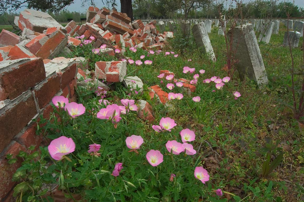 Breached brick fence of Chalmette National...Bernard Parish. New Orleans, Louisiana