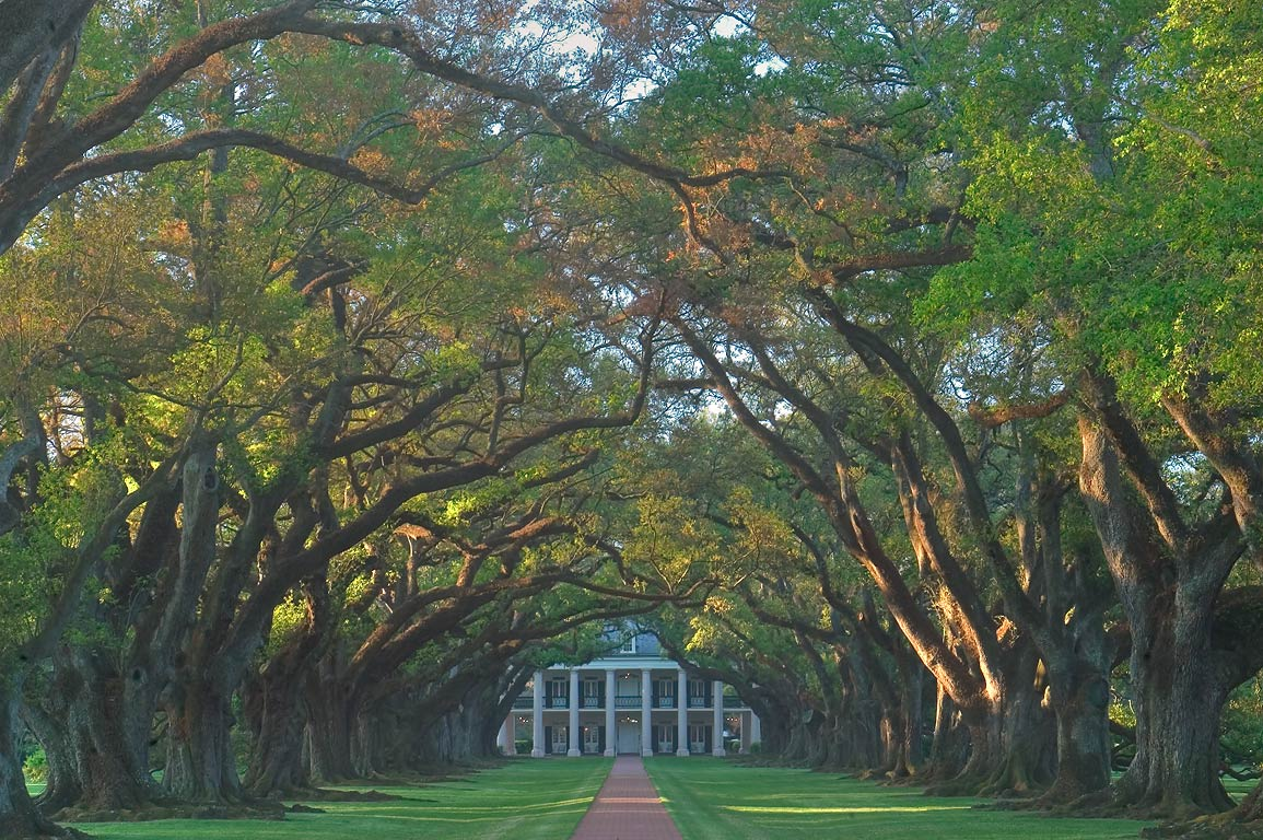 Oak Alley Plantation, view from River Rd.. Vacherie, Louisiana