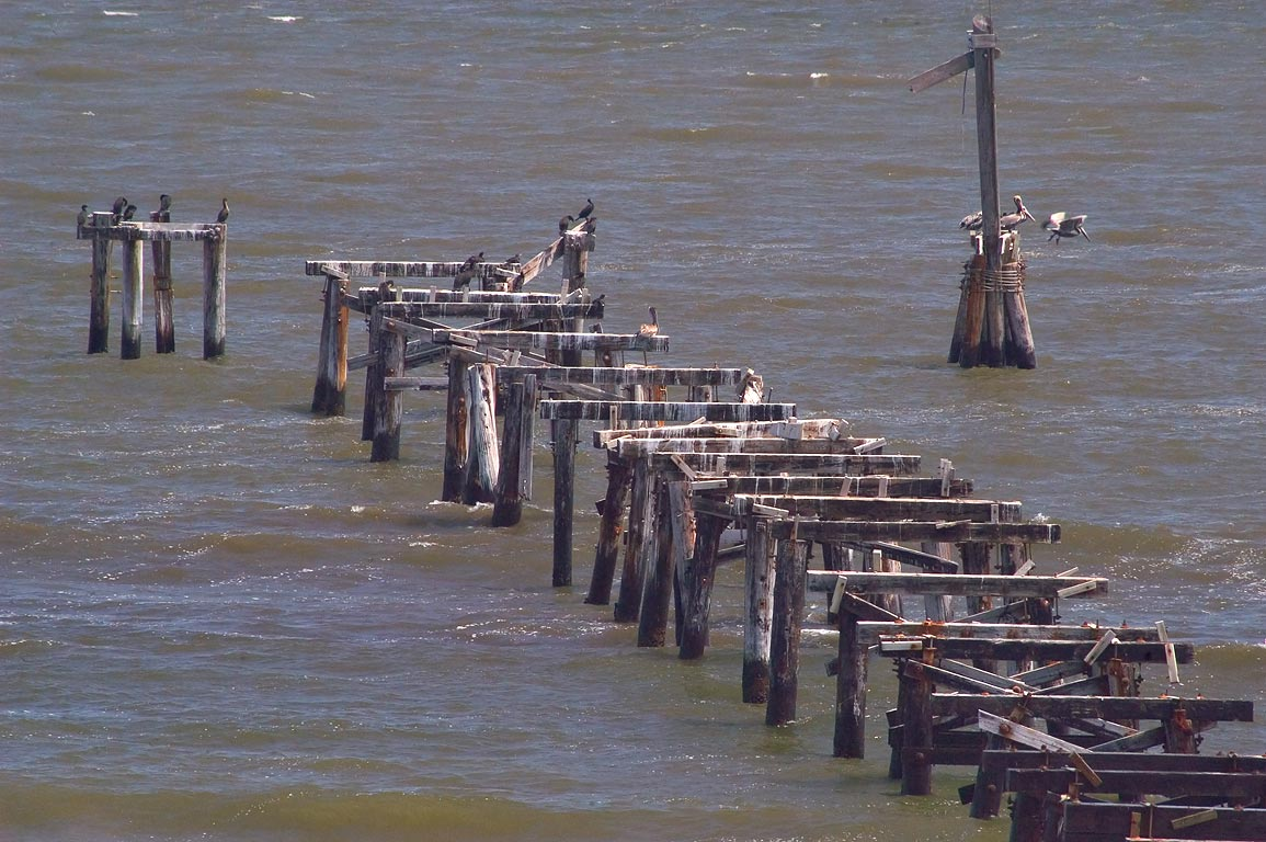 Pelicans sitting on remains of fish pier in Grand Isle State Park. Louisiana