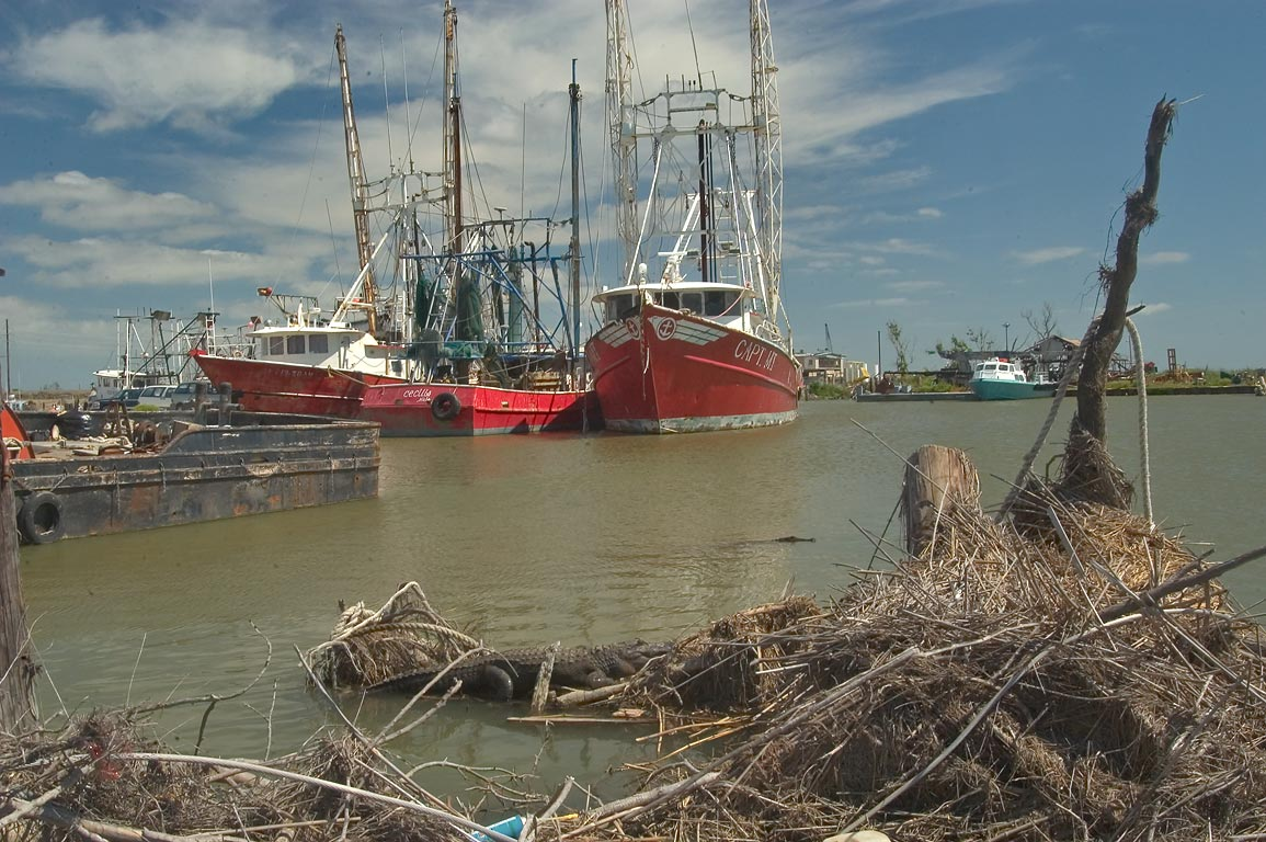 "Alligators guarding fishing ships ""Cecilla"" and...Venice. Plaquemines Parish, Louisiana"
