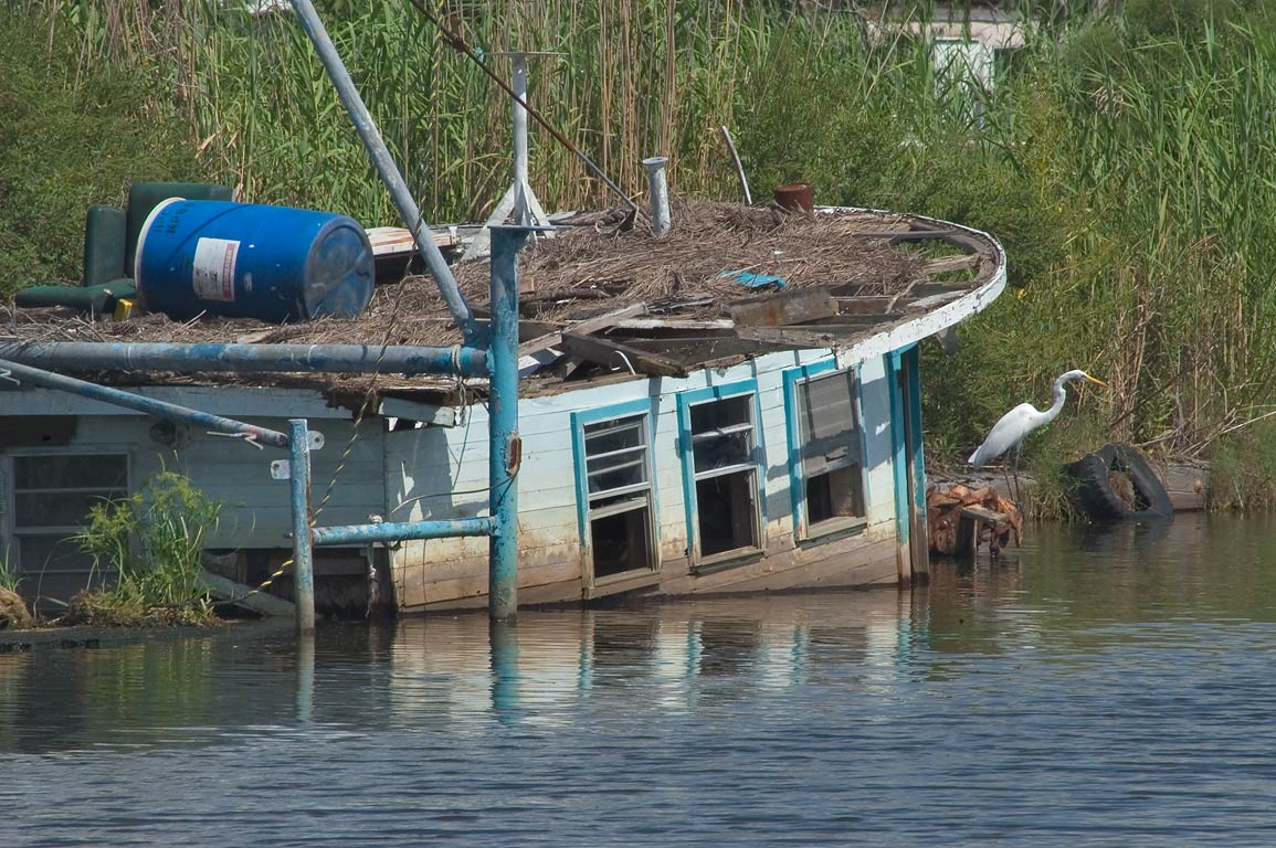 White egret sitting near sunken fishing boat in...Terrebonne Parish. Dulac, Louisiana