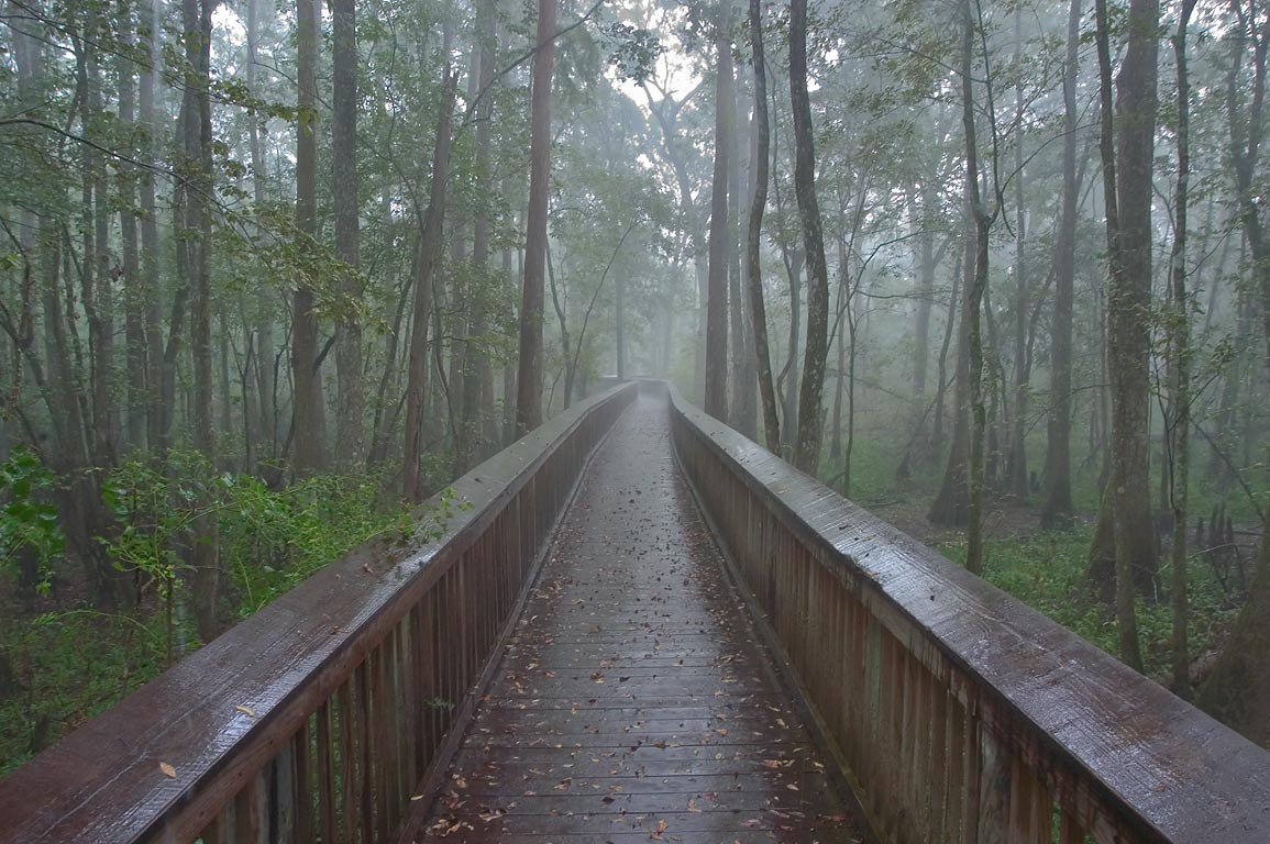 Tickfaw State Park, swamp boardwalk of Gum...Trail at rain. Springfield, Louisiana
