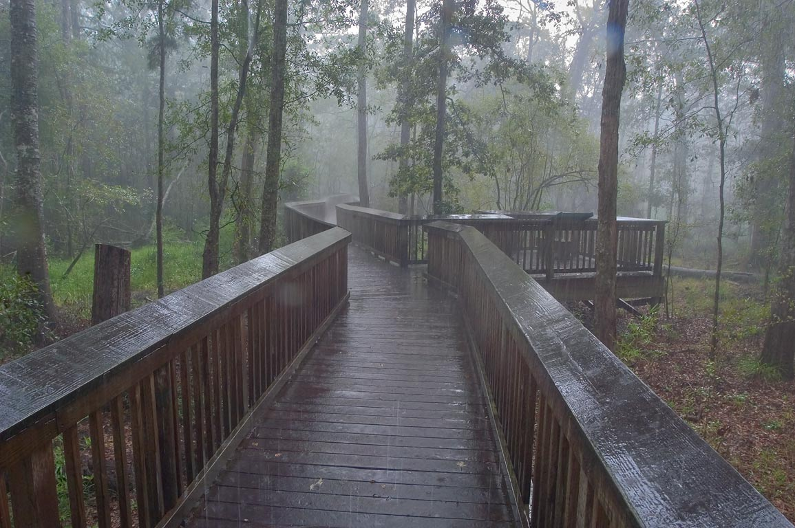 Tickfaw State Park, a boardwalk and a swamp...Trail at rain. Springfield, Louisiana