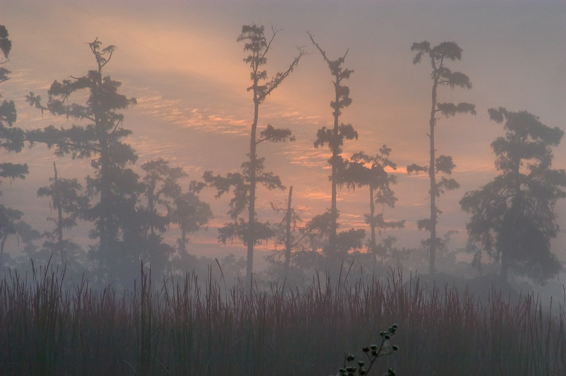 Misty sunrise from Marsh Overlook Trail in Jean...south from New Orleans. Louisiana