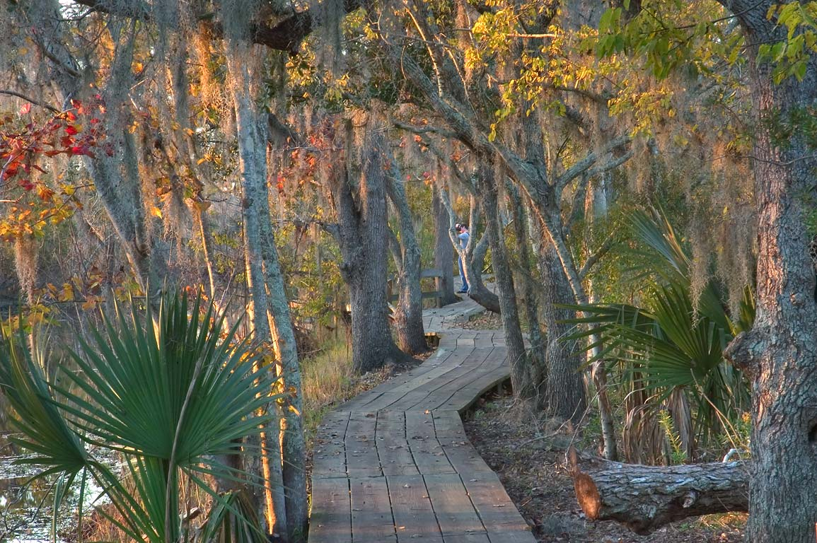 Boardwalk of Marsh Overlook Trail in Barataria...South from New Orleans, Louisiana