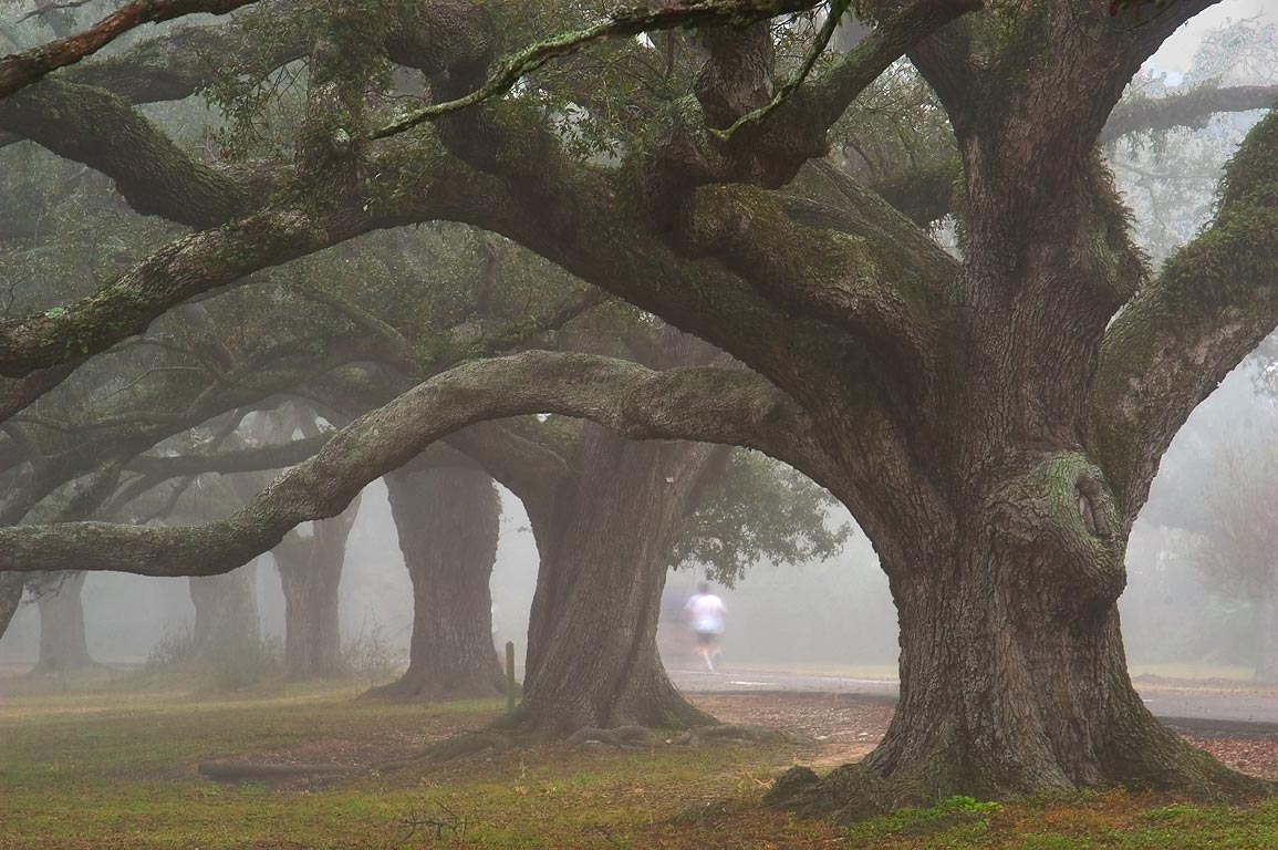 Jogging on West Ave. of Audubon Park in fog. New Orleans, Louisiana