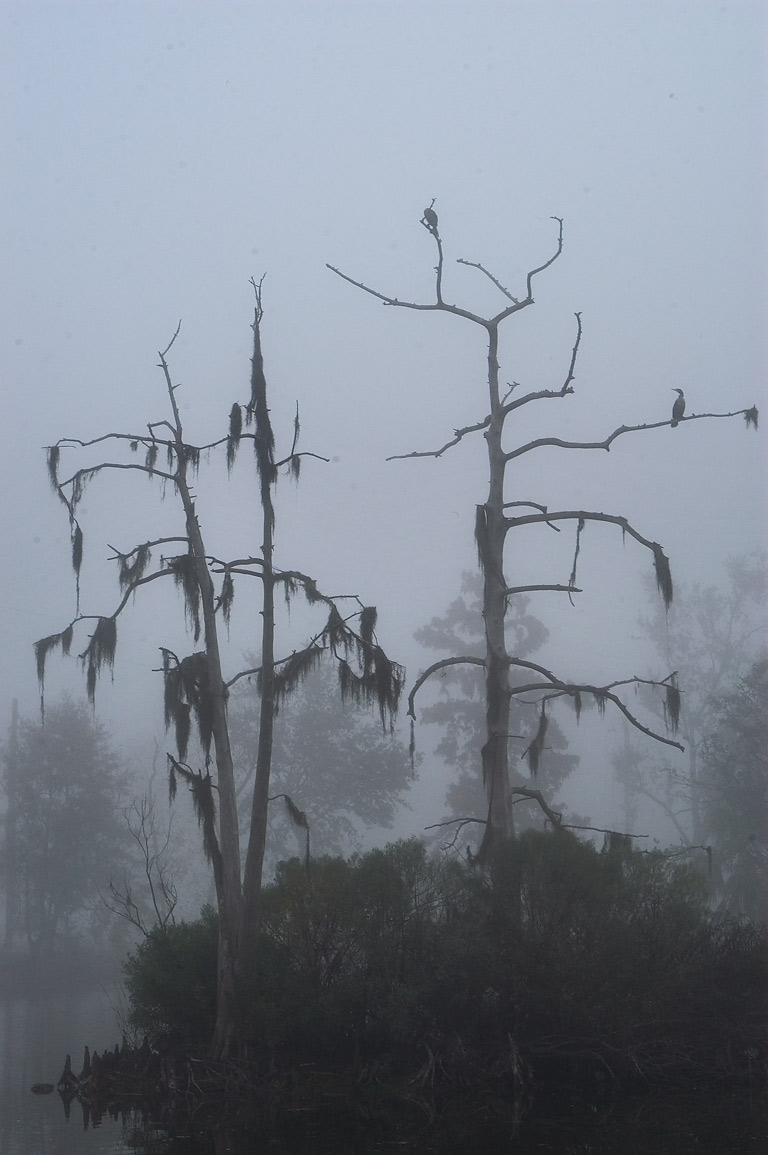An island in a lagoon of City Park in fog. New Orleans, Louisiana