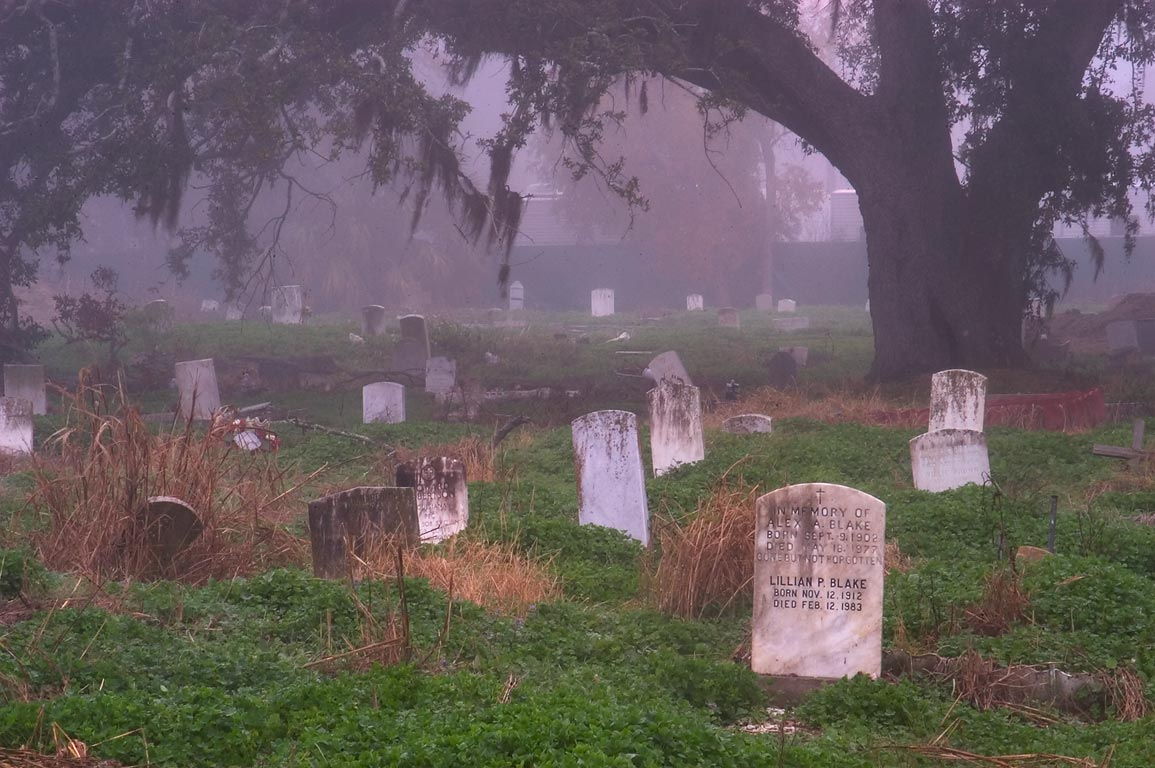 Live oak in Holt Cemetery in fog. New Orleans, Louisiana