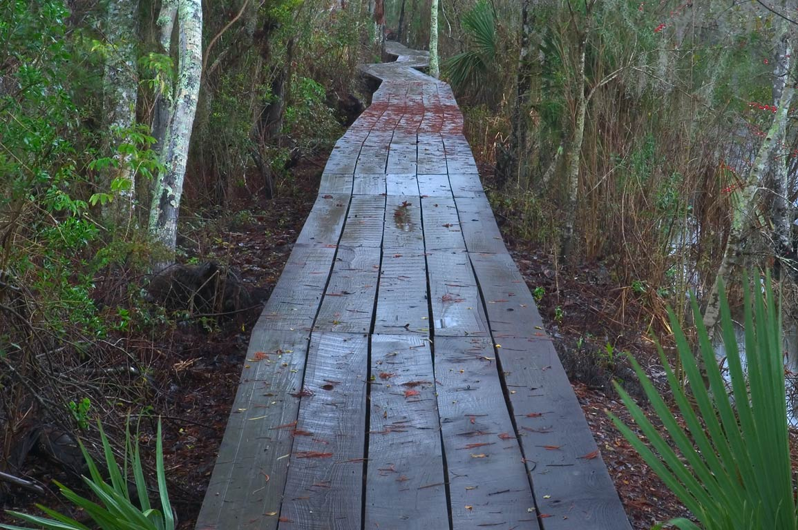 A boardwalk of Marsh Overlook Trail in Barataria...South from New Orleans, Louisiana