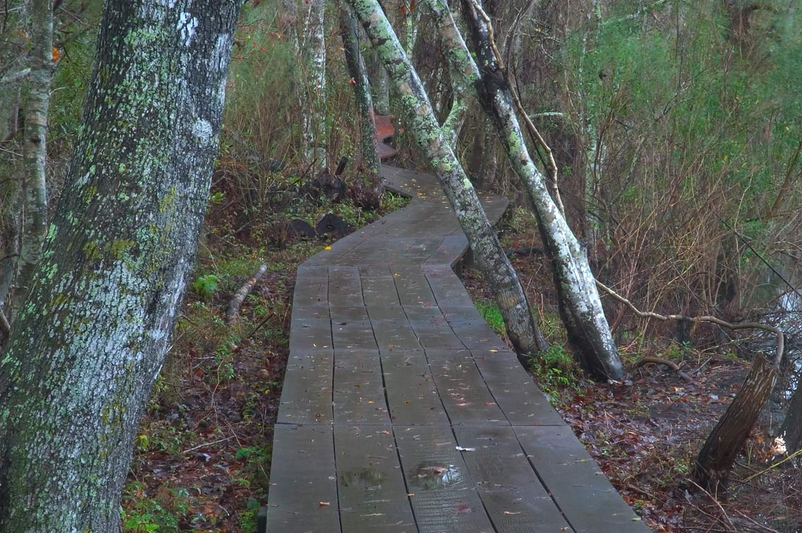 Wet boardwalk of Marsh Overlook Trail in...South from New Orleans, Louisiana