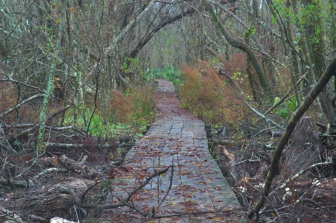 Boardwalk of Ring Levee Trail in Barataria Preserve. South from New Orleans, Louisiana