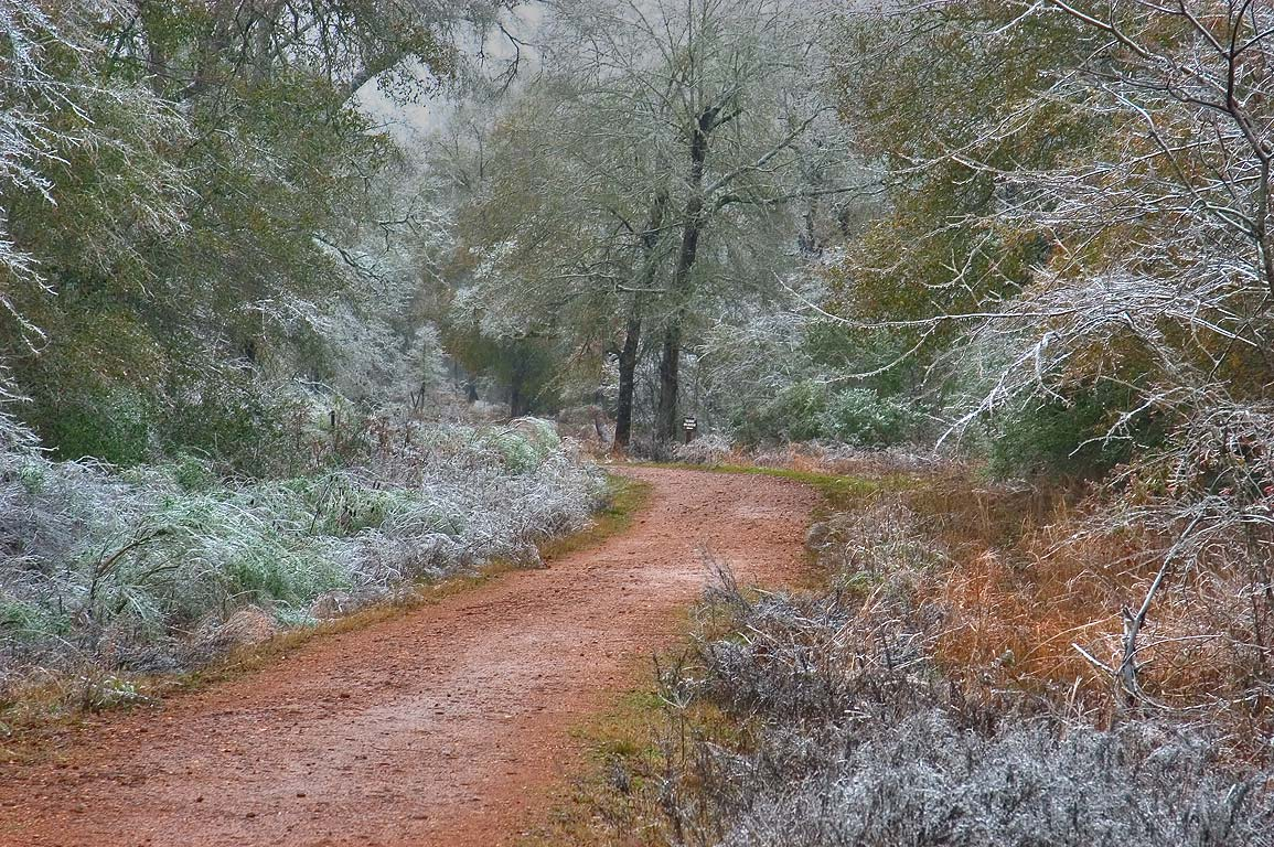 Iron Bridge Trail near Sedge Meadow in Lick Creek...ice storm. College Station, Texas