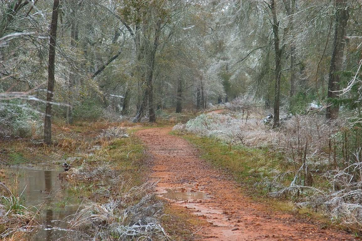 The path of Deer Run Trail in Lick Creek Park after ice storm. College Station, Texas