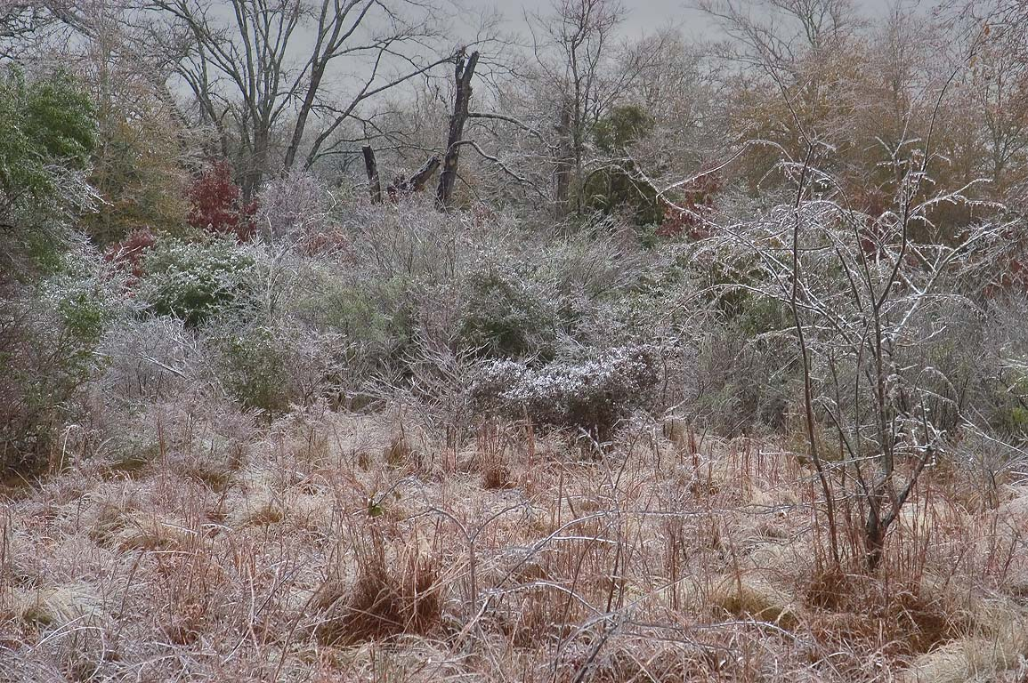 Icy forest near Iron Bridge Trail in Lick Creek...ice storm. College Station, Texas