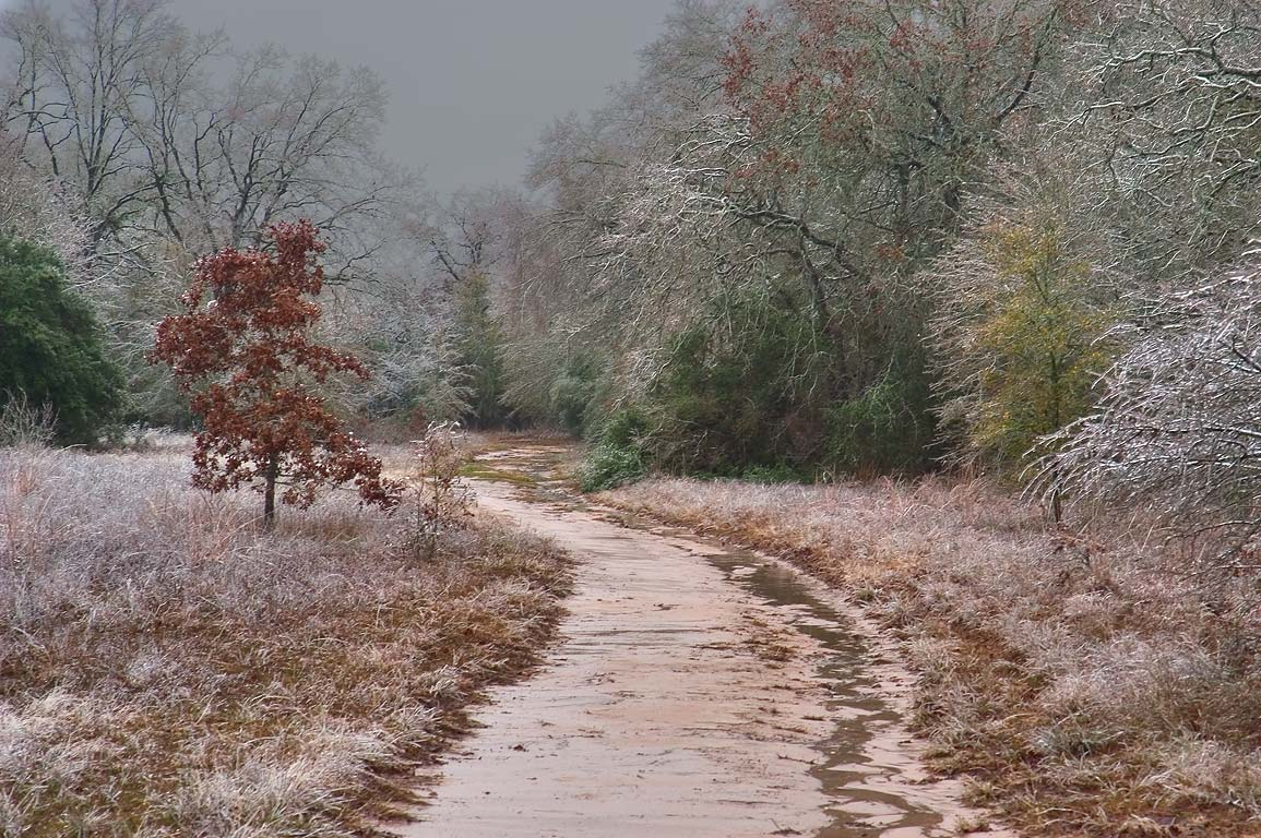 Post Oak Trail in Lick Creek Park after ice storm. College Station, Texas