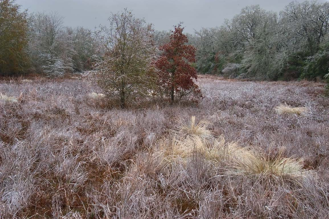 A meadow near Post Oak Trail in Lick Creek Park after ice storm. College Station, Texas