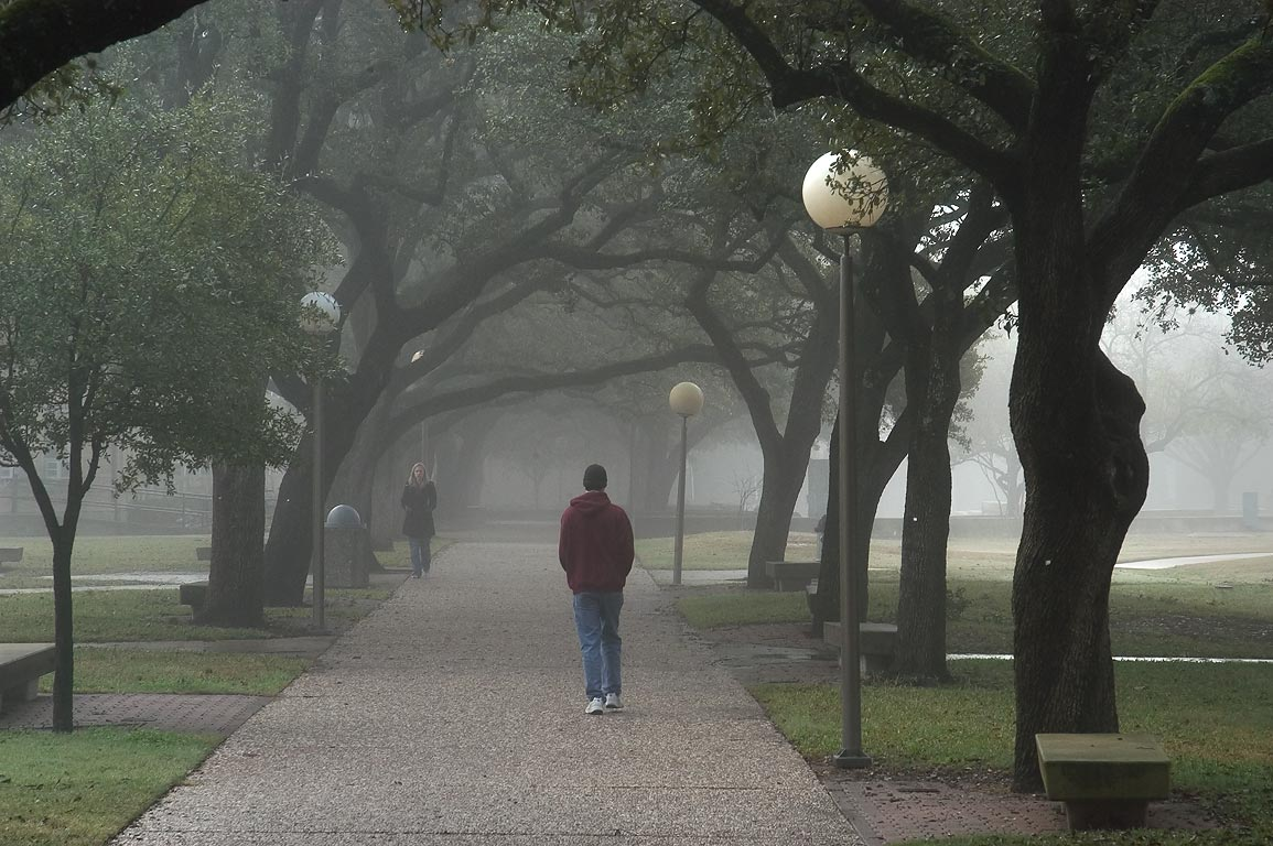 An oak alley along Military Walk in front of...in fog. College Station, Texas