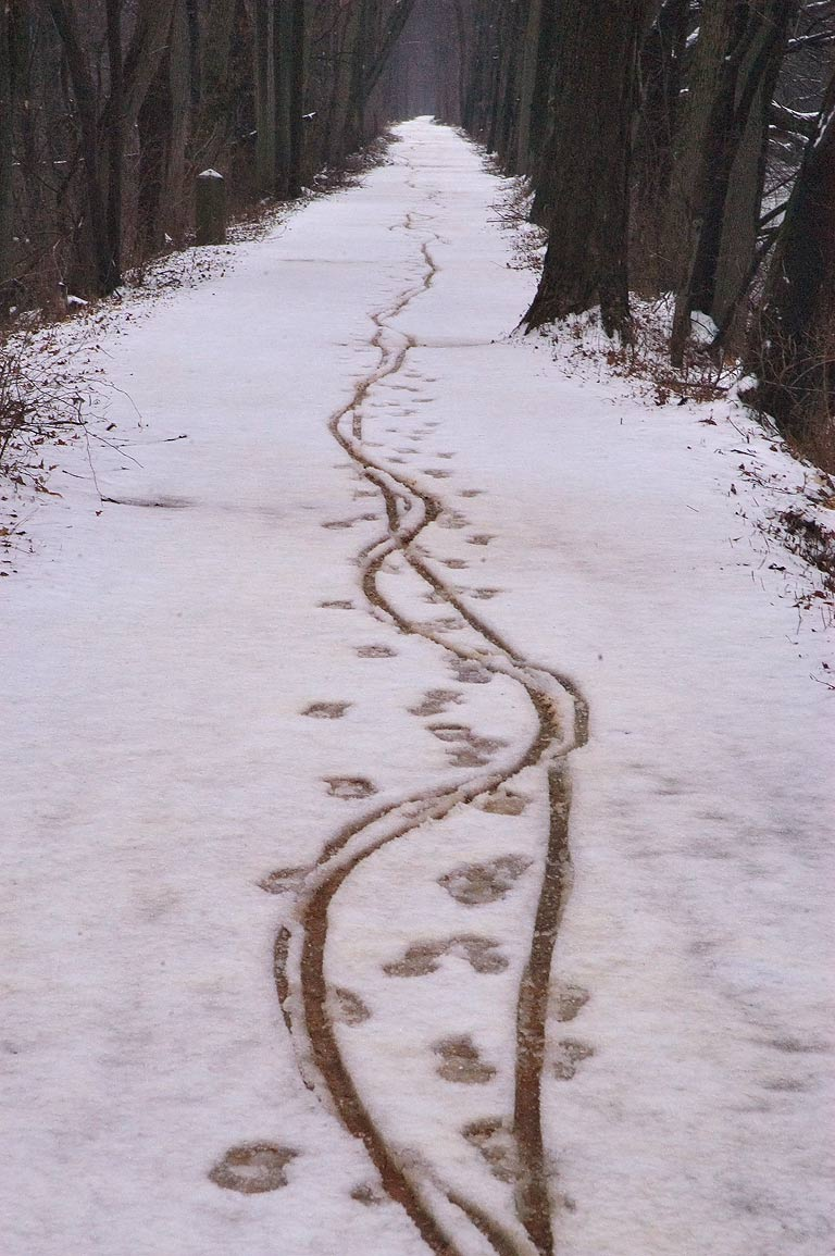 Tracks on a trail of Delaware and Raritan Canal State Park. Kingston, New Jersey