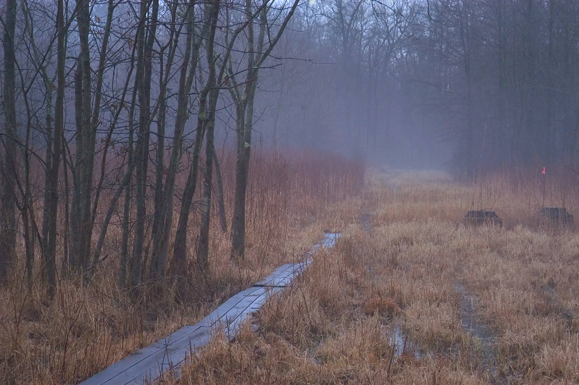A boardwalk in Cook Natural Area in fog. Princeton, New Jersey