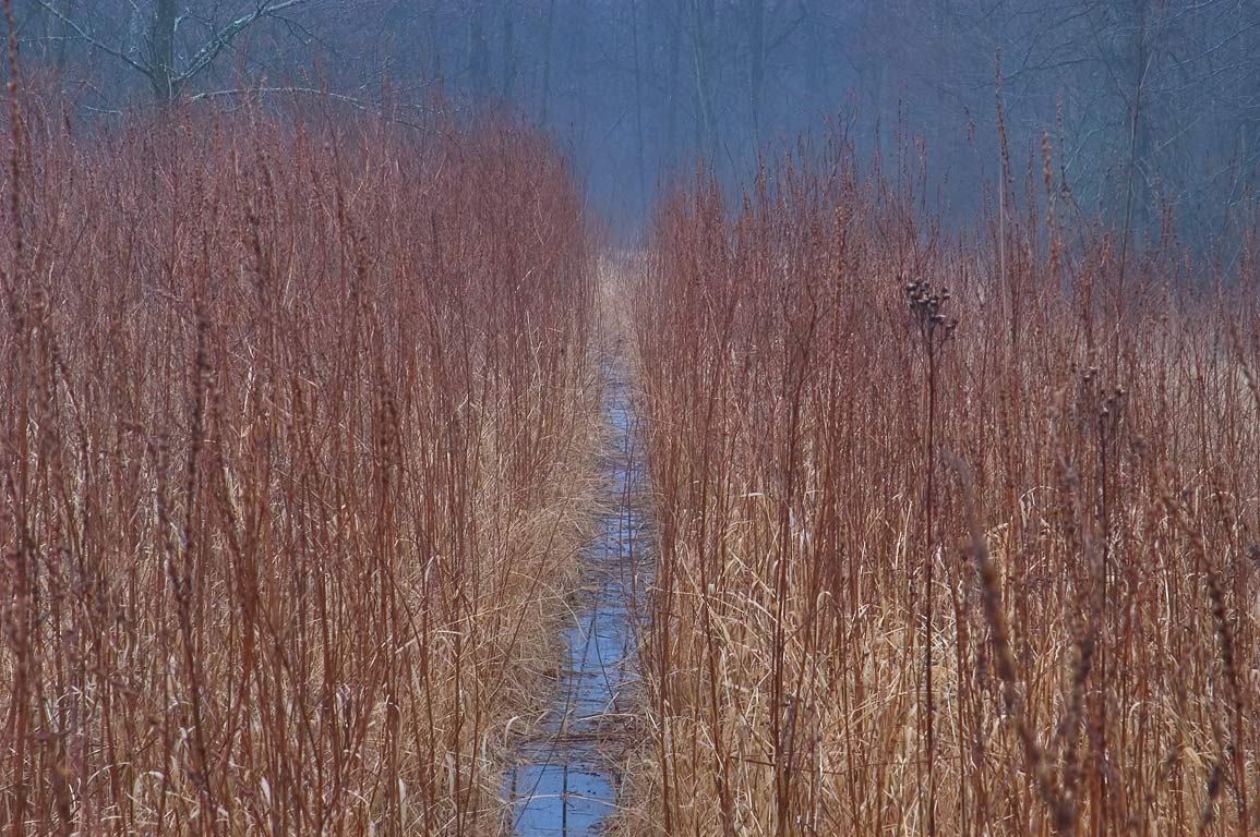 A boardwalk in Cook Natural Area through a marsh in fog. Princeton, New Jersey