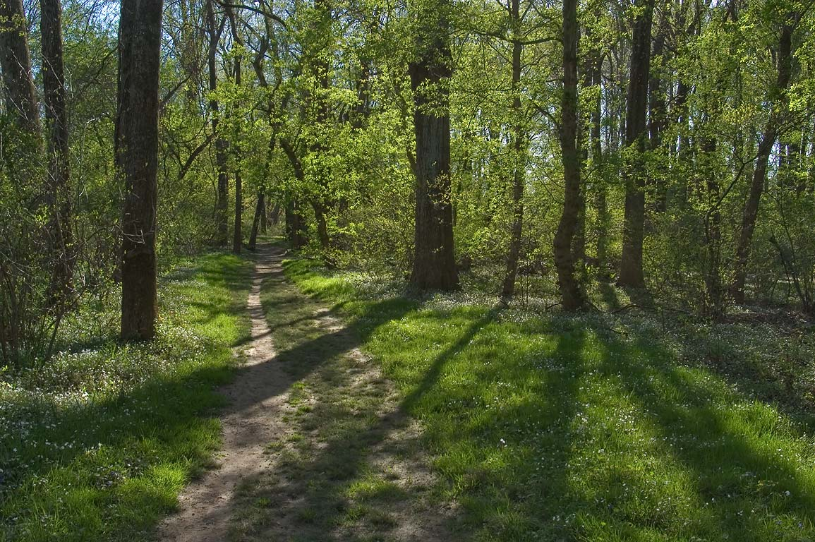 River's Edge Trail in a park of Institute for...Woods). Princeton, New Jersey