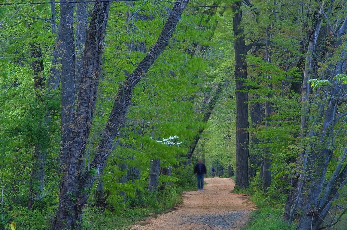 A path in Delaware and Raritan Canal State Park. North from Kingston, New Jersey