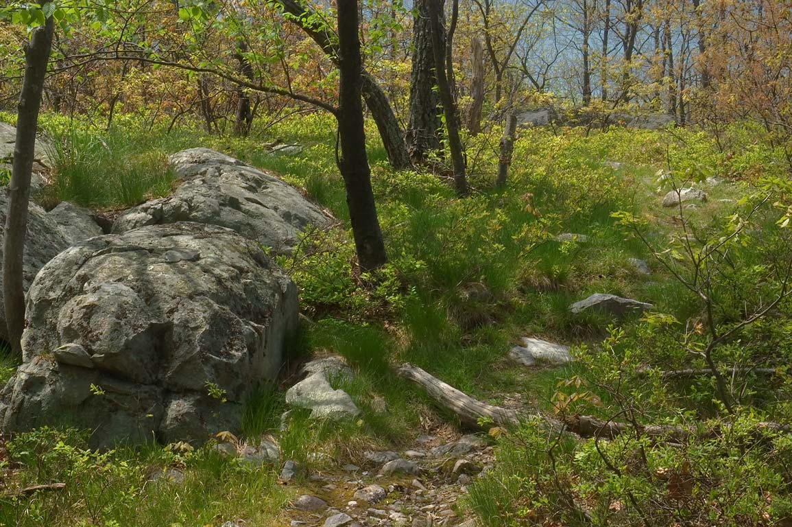 Stones on Appalachian Trail south from...Delaware Water Gap, New Jersey