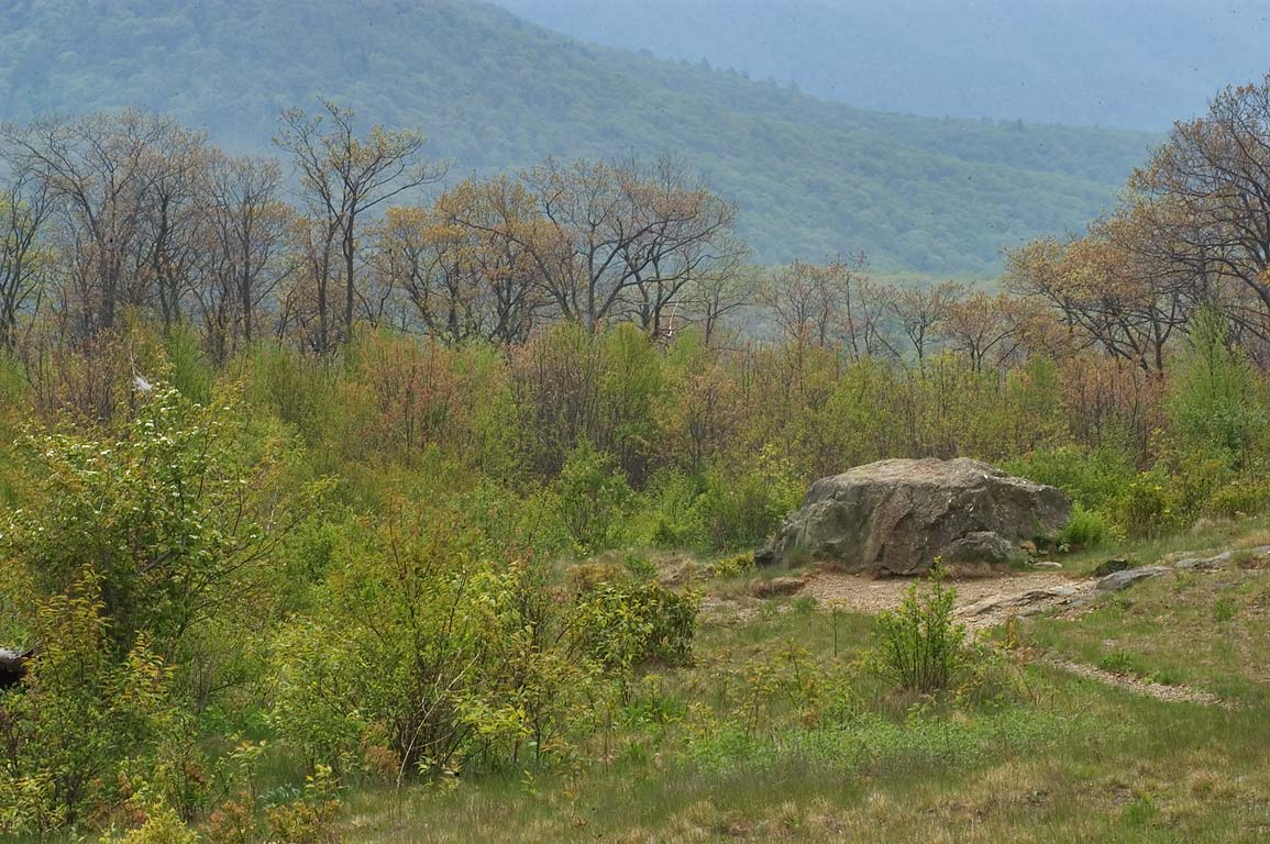 A stone from Thorofare Mountain Overlook of Skyline Dr.. Skyland, Virginia