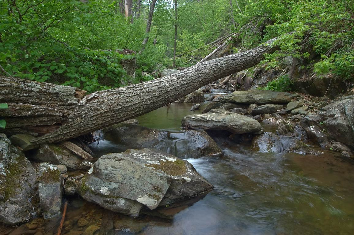 A creek near Whiteoak Canyon Trail near Skyline Dr.. Skyland, Virginia