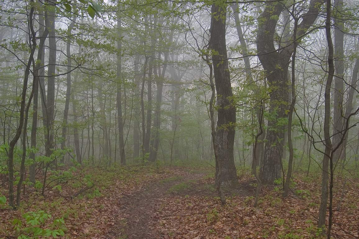 View from Skyline Dr. in fog in the area of Dundo Group Camp. Virginia