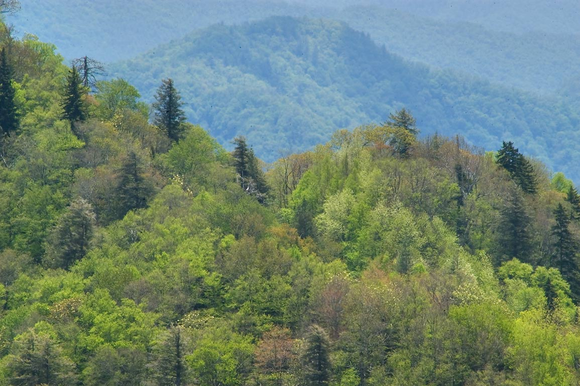 A view from Newfound Gap Rd.. Smoky Mountains National Park, Tennessee