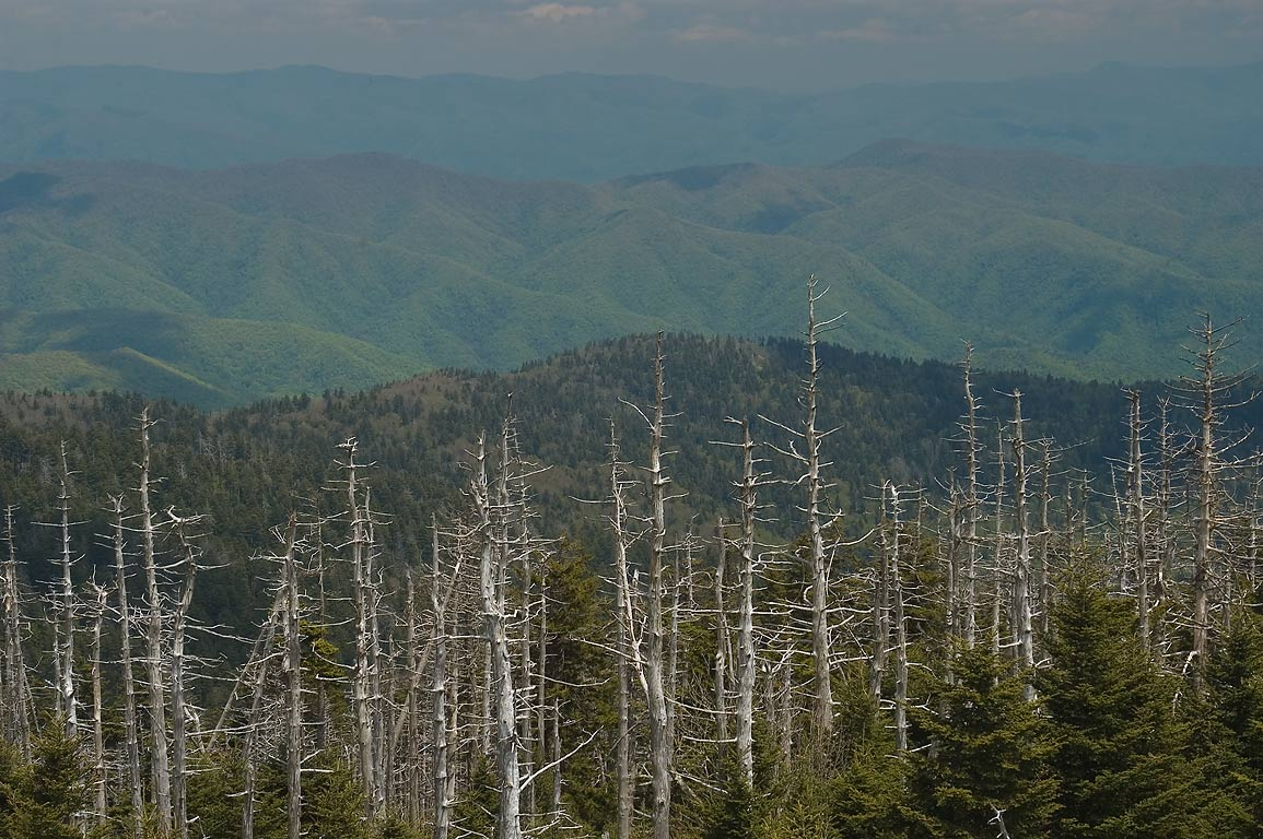 A view from Clingmans Dome. Smoky Mountains National Park, Tennessee