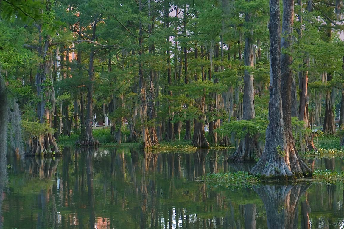 Cypress Lake in the University of Louisiana at Lafayette campus. Lafayette, Louisiana