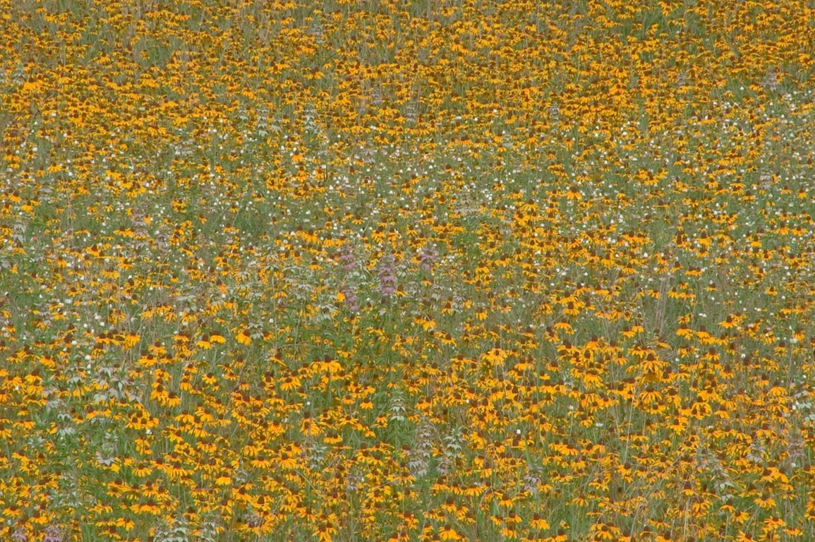 Flowers carpeting a field near Visitor complex in...State Historic Site. Washington, Texas